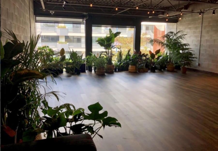 Garden Studio w Tons of Natural Light vancouver rental