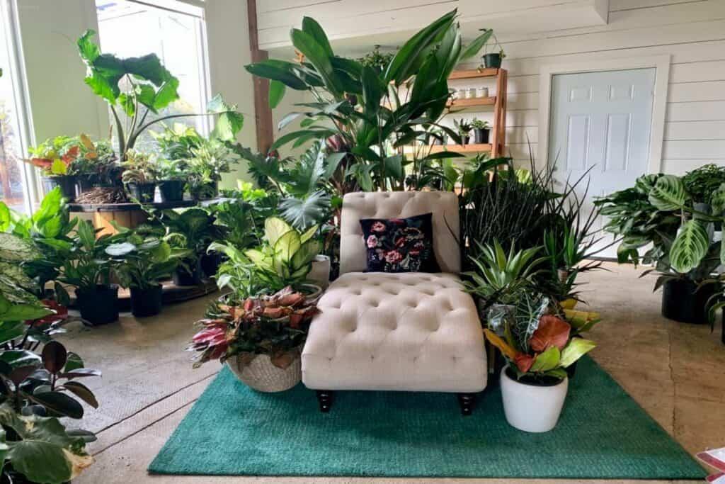a plant oasis in atlanta