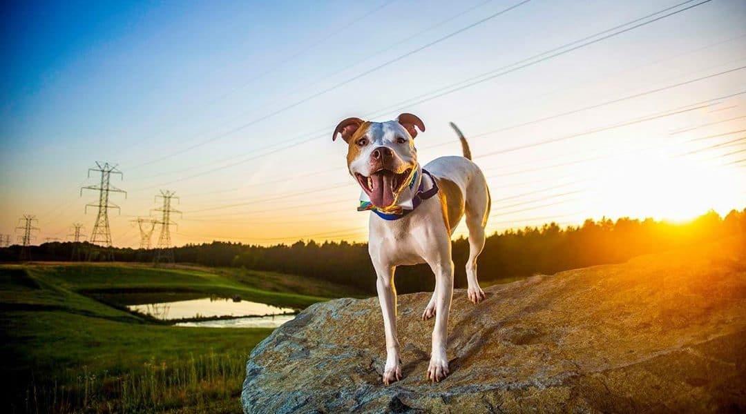 best charlotte pet photographers