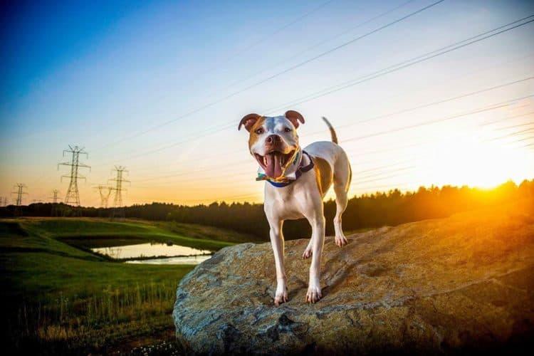 The 7 Best Pet Photographers in Charlotte   Peerspace