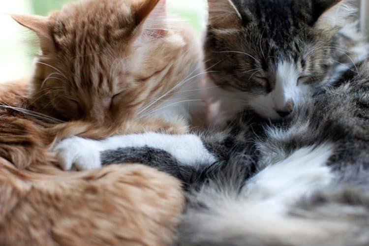 The 8 Best Pet Photographers in Denver   Peerspace