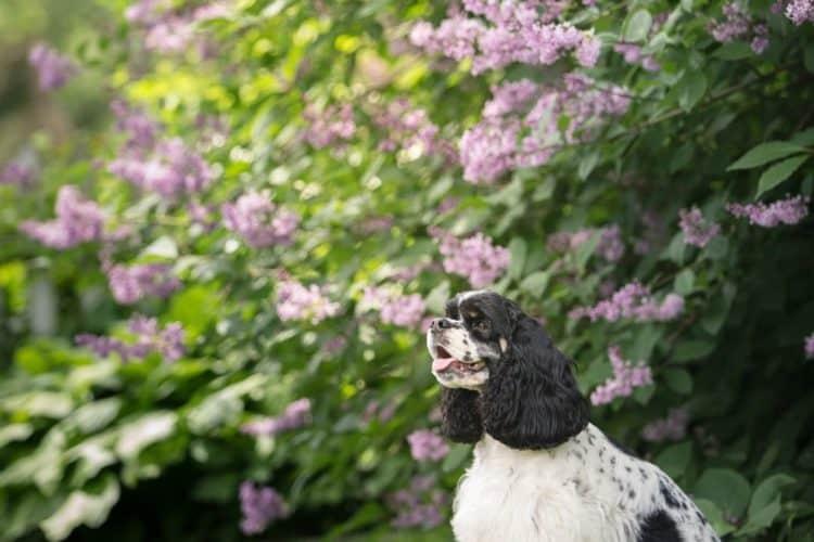 The 6 Best Pet Photographers in Grand Rapids | Peerspace