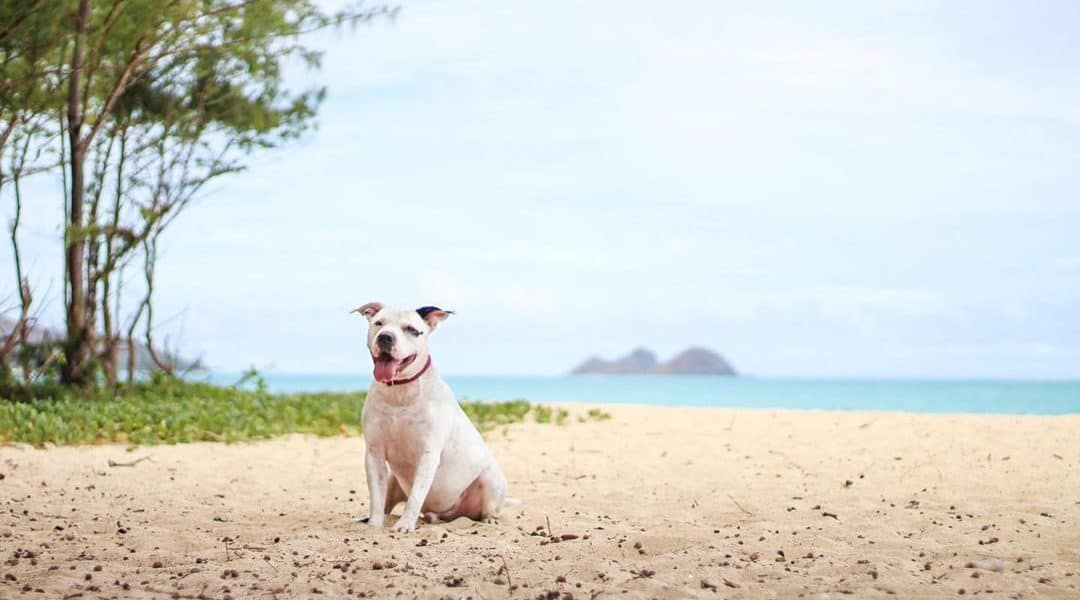 best honolulu pet photographers