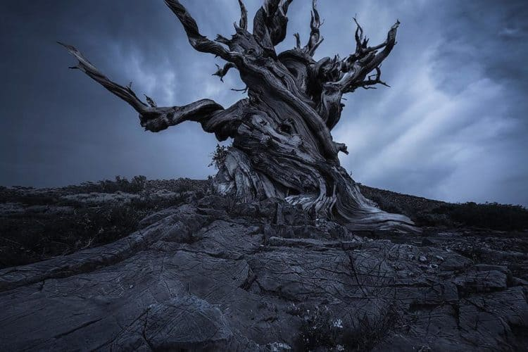 The 7 Best Landscape Photographers in San Francisco   Peerspace