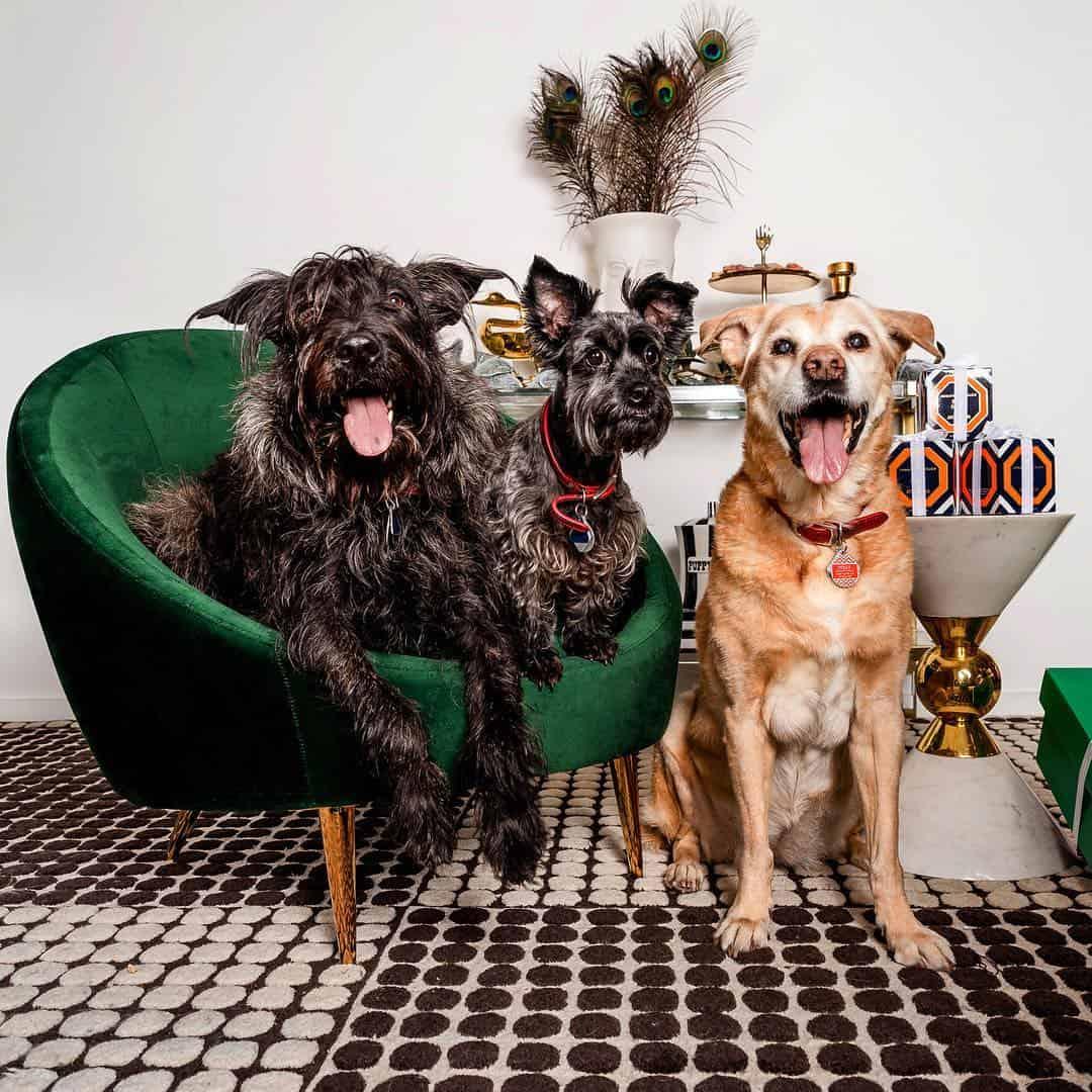 The 8 Best Pet Photographers in New York City | Peerspace