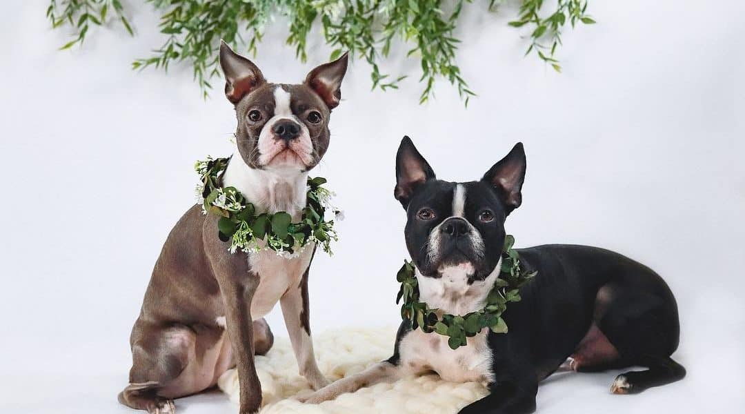 best pet photographers in indianapolis