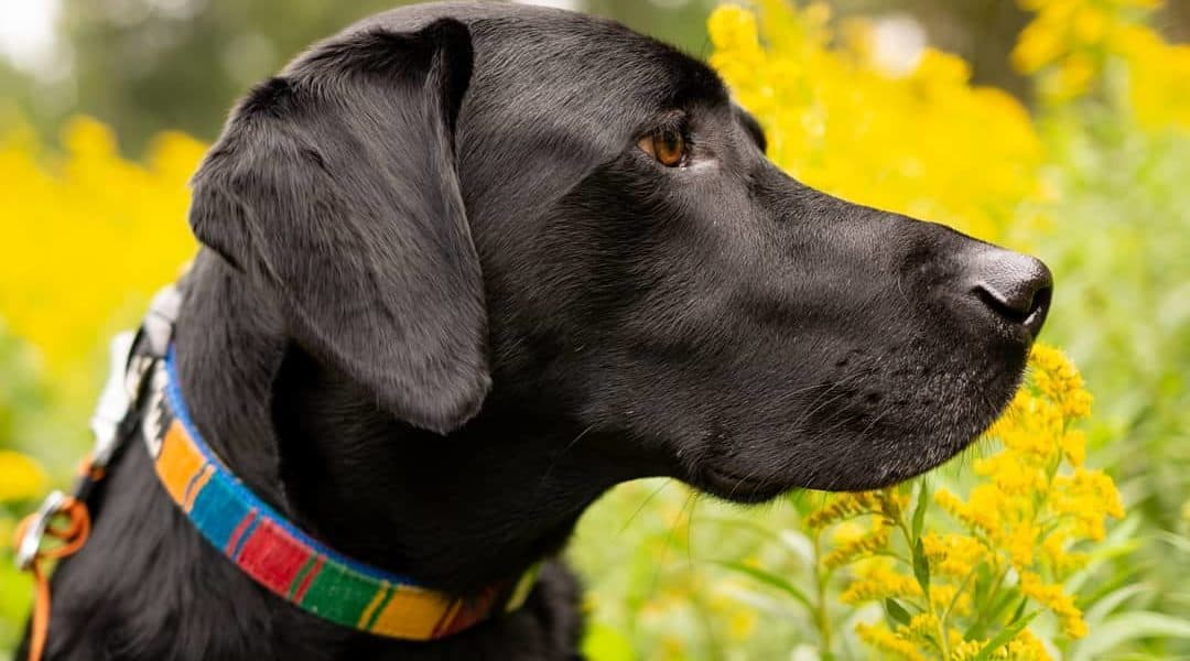 best pet photographers in raleigh