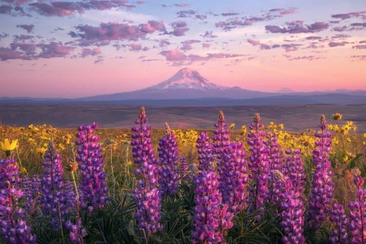 The 9 Best Landscape Photographers in Portland | Peerspace