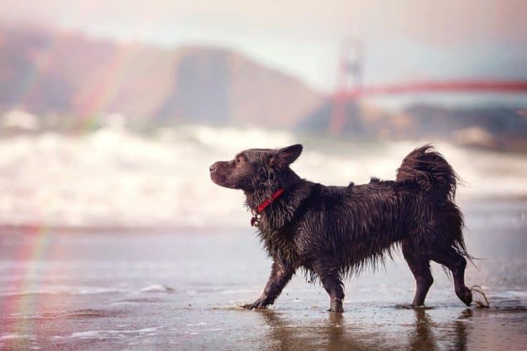 The 7 Best Pet Photographers in Sacramento   Peerspace