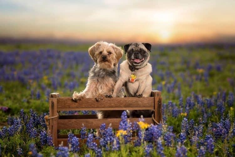 The 7 Best Pet Photographers in San Antonio | Peerspace
