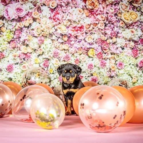 The 7 Best Pet Photographers in Salt Lake City | Peerspace