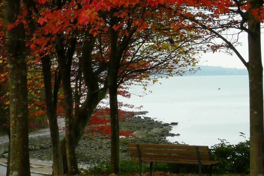 maple trees and a lake in Vancouver