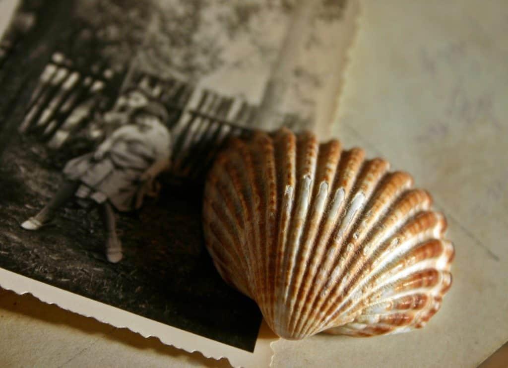 seashell and photograph