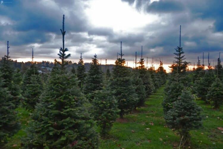 13 Merry Zoom Christmas Party Ideas | Peerspace