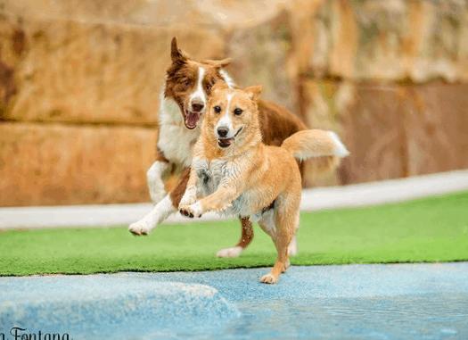 The 10 Best Pet Photographers in Sydney | Peerspace