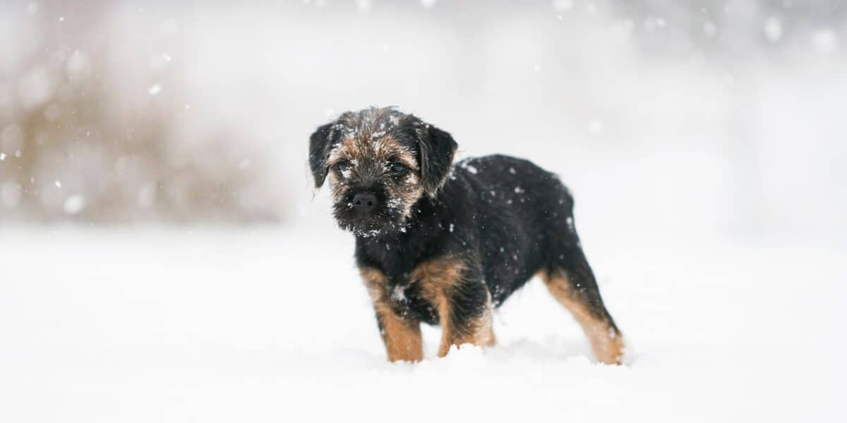 puppy in falling snow