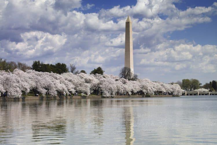 The 8 Best Maternity Photoshoot Ideas near Washington, D.C. | Peerspace